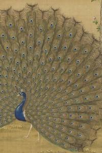 Il pavone apre la sua coda, Lang Shih-ning (Giuseppe Castiglione), dinastia Qing, rotolo orizzontale, inchiostro e colori su seta, 328 X 282 centimetri