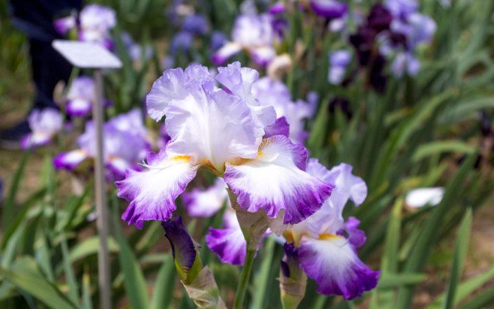 Giardino dell'Iris, Firenze - Foto: Caterina Chimenti / Lonely Traveller