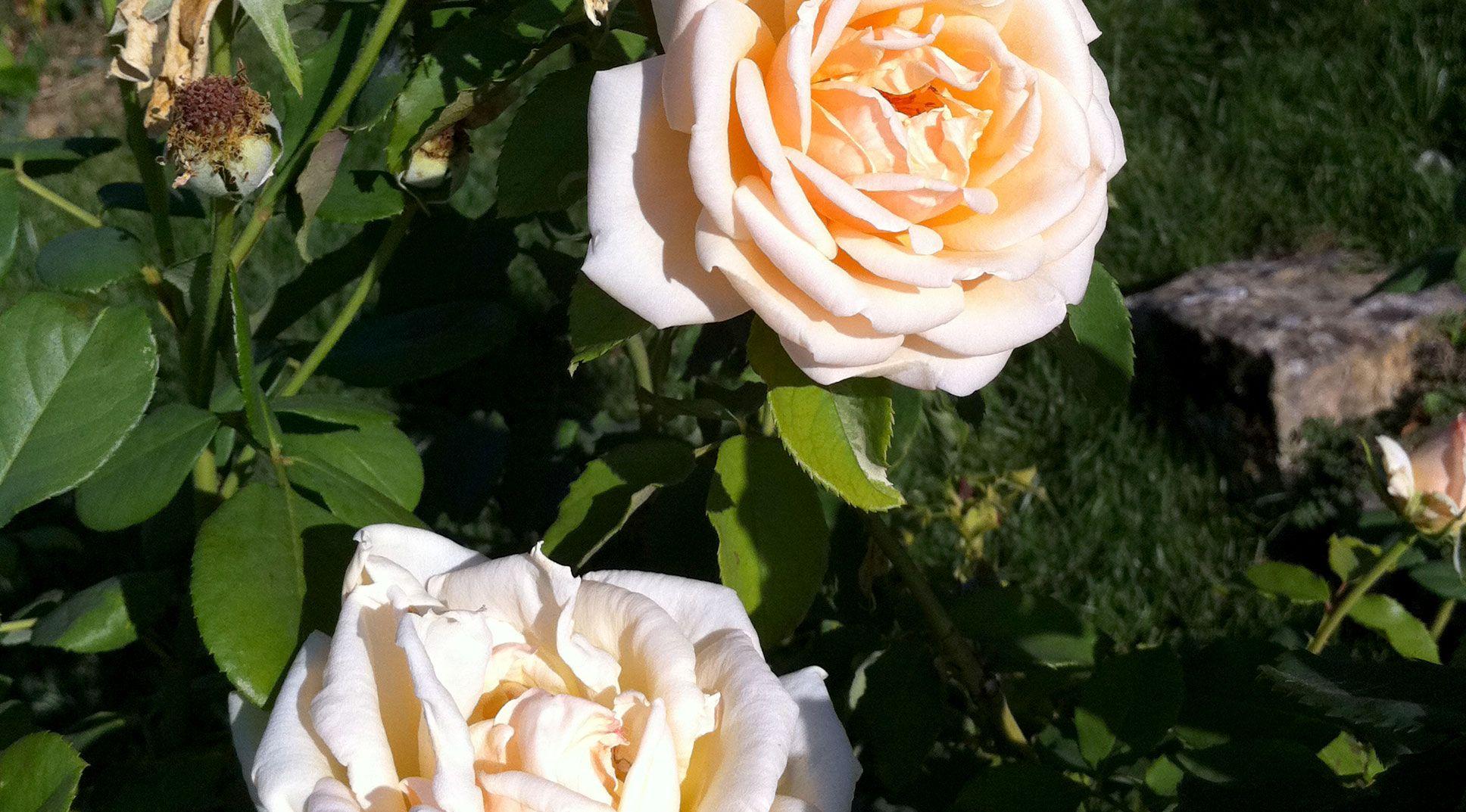 Folon al Giardino delle Rose di Firenze